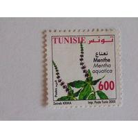 Тунис 2005г. Флора