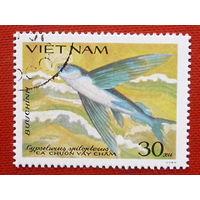 Вьетнам. Рыба. ( 1 марка ).