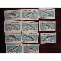 Спичечные этикетки:Промысловые рыбы СССР.Лен.СНХ-56