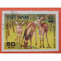 Вьетнам 1990г. Фауна.
