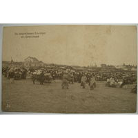 Вид Бреста , письмо 17/2 1916 года из Баранович.