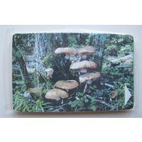 Опята, грибы (новая в упаковке)