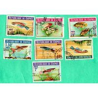 Марки-1964 -Гвинея- Рыбы