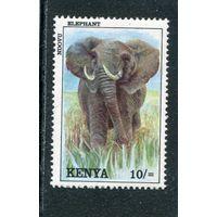 Кения. Слон