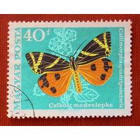 Венгрия. Бабочка. ( 1 марка ).