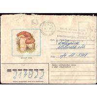 1982 год Белый гриб