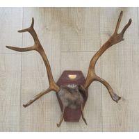 Панно рога северного оленя,мех,дерево,чеканка,50 см.Коми АССР,С РУБЛЯ