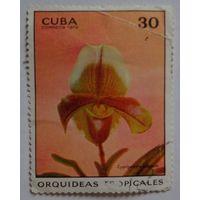 Куба.1972.орхидея