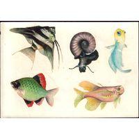 Переводные картинки Рыба