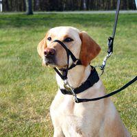 """Шлея   """"TRIXIE"""" для собак для дрессировки """"Top Trainer Training Harness"""""""