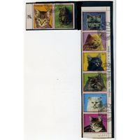 Парагвай 1982г. кошки. 7м. сцепка
