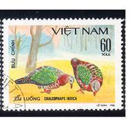 1980 Вьетнам. Птицы