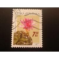 Чехия 2006 кактус