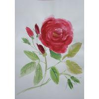 Акварель , роза , 20х30см.