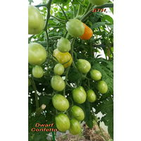 Семена томата Dwarf Confetto