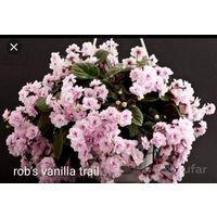Фиалка rob's vanilla trail стартеры