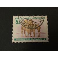 Молодняк. Монголия,1968, марка из серии