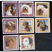 Экваториальная Гвинея 1978 г. Собаки. Животные. Фауна, полная серия из 8 марок. Чистая #0028-Ч1P4