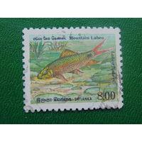 Шри-Ланка.  Рыбы.