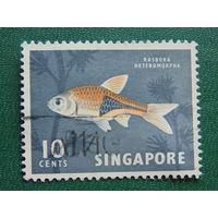 Сингапур.  Рыбы.
