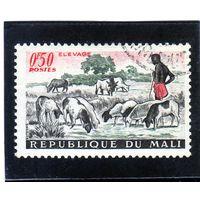 Мали.Ми-30.Домашние овцы, крупный рогатый скот. Серия: Сельское хозяйство и искусство. 1961.