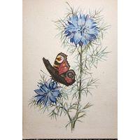 Старая карточка Открытка Акварель Бабочка Чистая