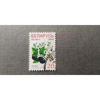 Марка Беларусь 2004 год Флора