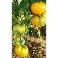 Семена томата Dwarf Orange Pride