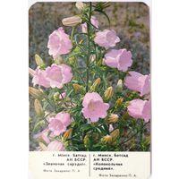 Календарик Цветы Колокольчик средний 1988 год