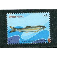 Непал. Лучеперые рыбы