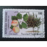 Тунис 2000 фрукты