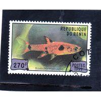 Бенин.Ми-1166. Аквариумные рыбки. Расбора. 1999