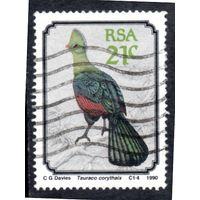 ЮАР. Mi:ZA 800. Книсна Турако (Tauraco corythaix) Серия: птицы. 1990.