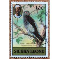 Птицы Сьерра-Леоне