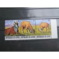 Марки - фауна, Гвинея, антилопы