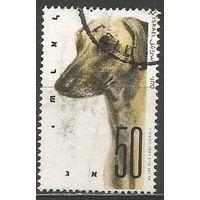 Израиль. Собаки. Борзая. 1987г. Mi#1065.