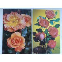 Розы. 1982 год