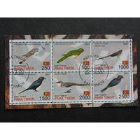 Восточный Тимор 2001 г. Фауна. Птицы.