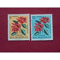 Сальвадор. Цветы.