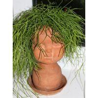 Рипсалис поликарпа – мягкий древесный кактус