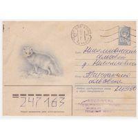 ХМК СССР, прошедший почту. Голубой песец