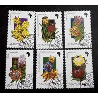 Венгрия 1990 г. Цветы Африки. Флора, полная серия из 6 марок #0129-Ф1