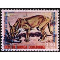 Кошки. Экваториальная Гвинея 1974. Каракал. Марка из серии. Гаш.