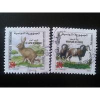 Тунис 2002 звери