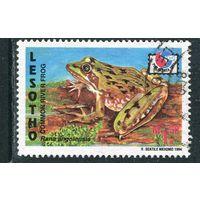 Лесото. Лягушка