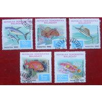 Мадагаскар. Рыбы (  5 марок ) 1982 года. 6-10.