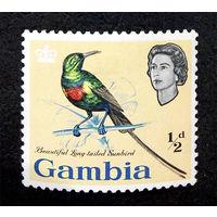 Гамбия 1963 г. Птицы. Фауна, 1 марка. Чистая  #0076-Ч1P5