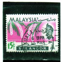 Малайзия. Селангор. Ми-103. Орхидея лисохвост.1965.