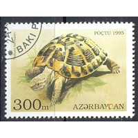 Азербайджан Фауна Черепаха Гаш. 1995