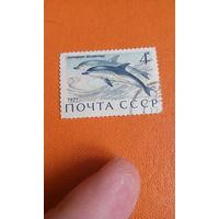 1971. ссср.дельфин - белобочка